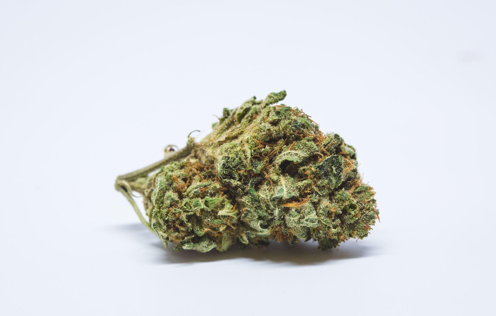 Candy Jack Weed; Candy Jack Cannabis Strain, Candy Jack Sativa Marijuana Strain