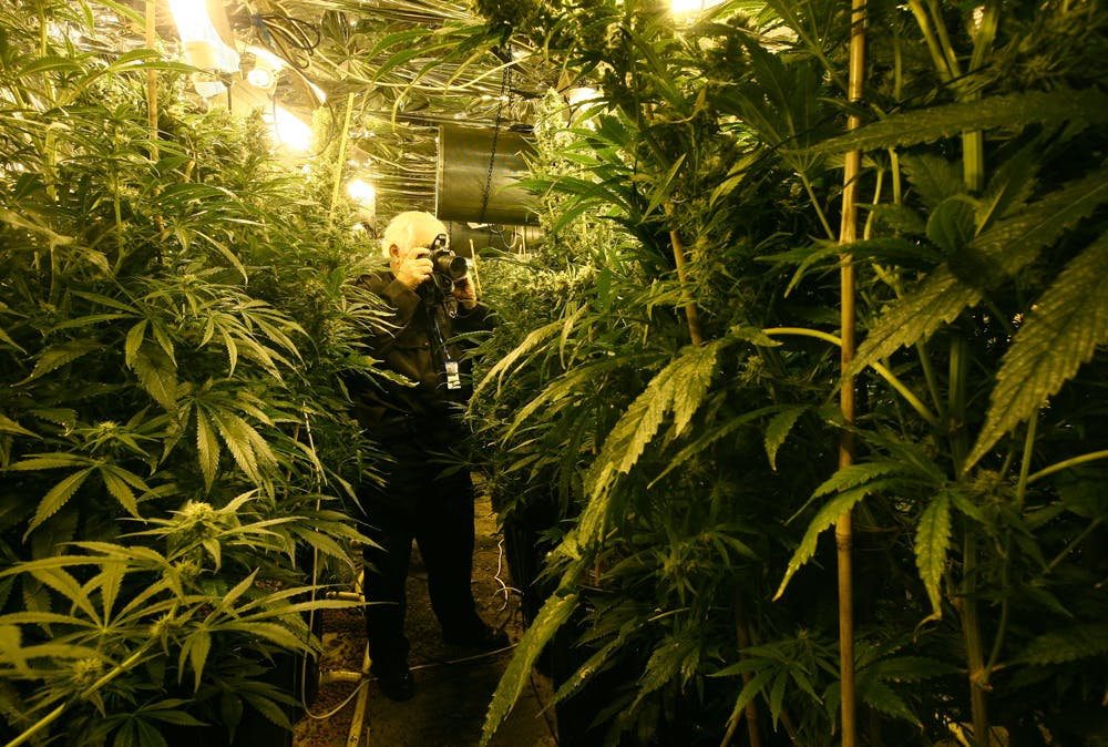 GettyImages 805614536 The government holds a patent on medical marijuana, yet claims it has no medical value