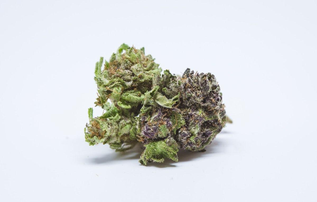 Silverback Gorilla Strain of Marijuana | Weed | Cannabis | Herb | Herb