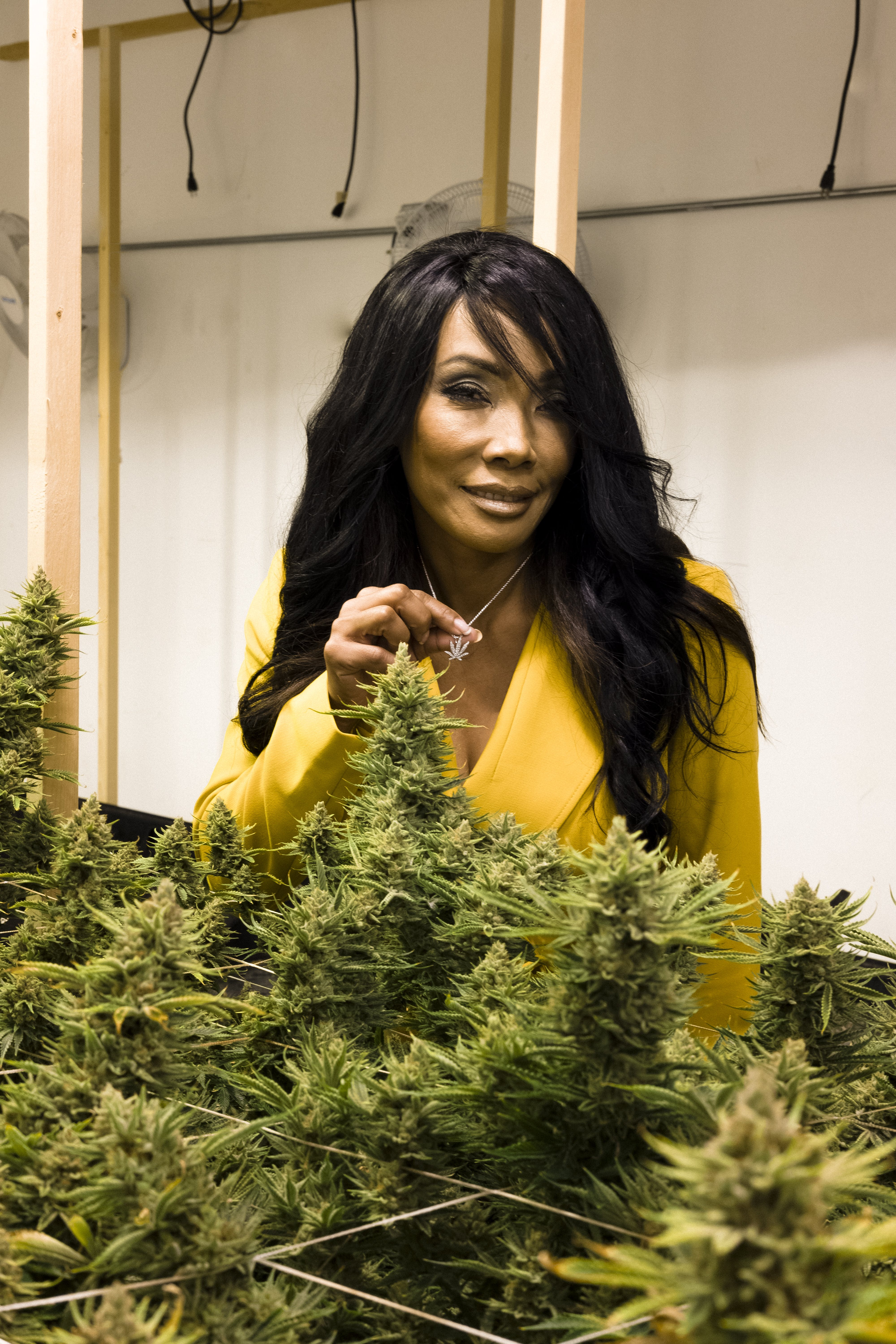 bonita money for herb final 0704 How to microdose weed and treat anxiety