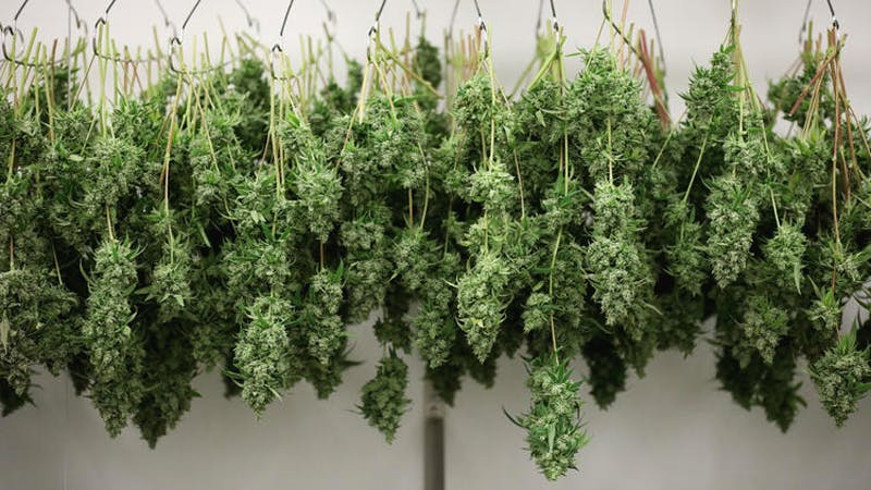 40566457041 6dcc327f86 o How to Get the Most Out Of Your Stash with the Best Weed Grinders