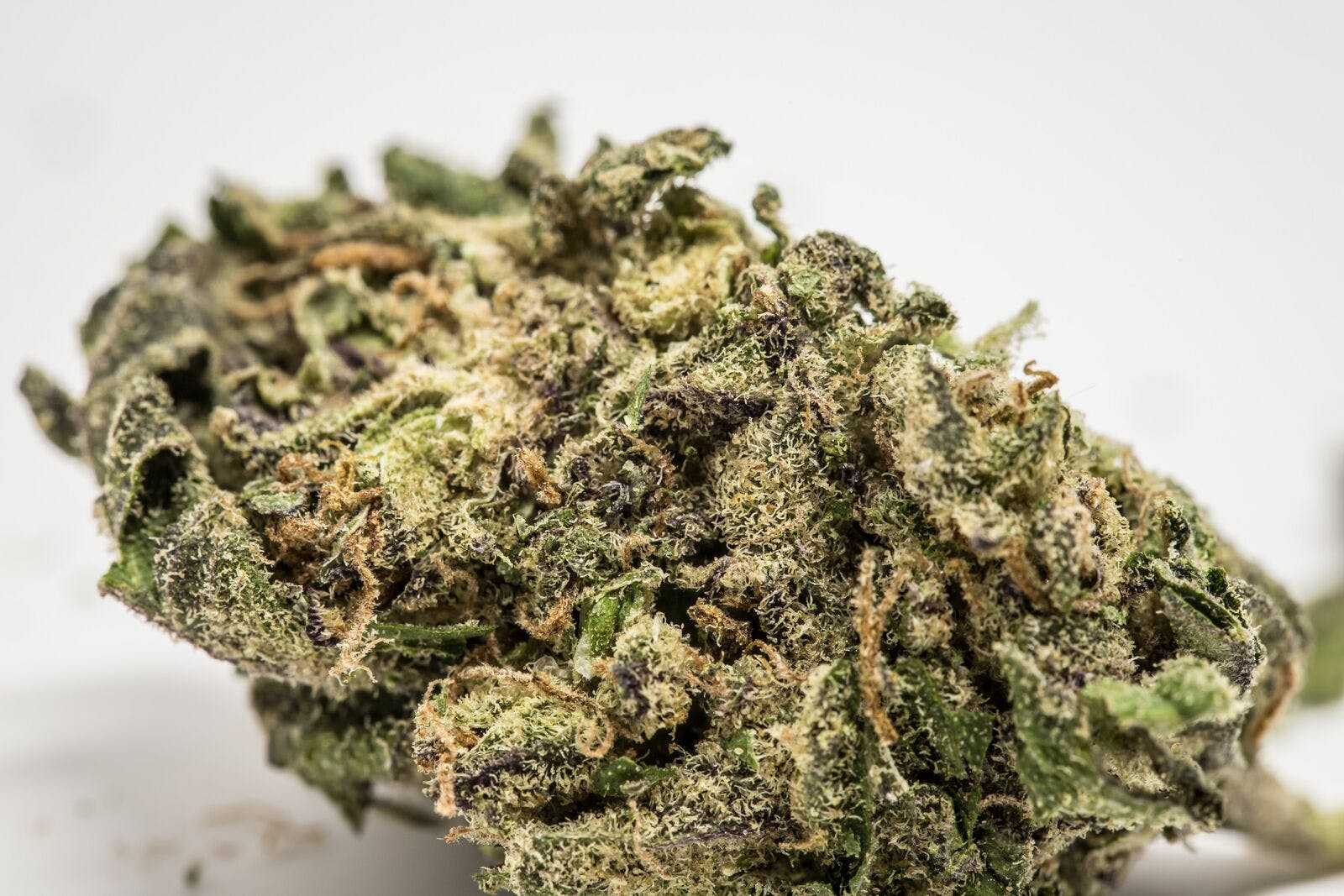 Ayahuasca Purple Weed; Ayahuasca Purple Cannabis Strain; Ayahuasca Purple Indica Marijuana Strain