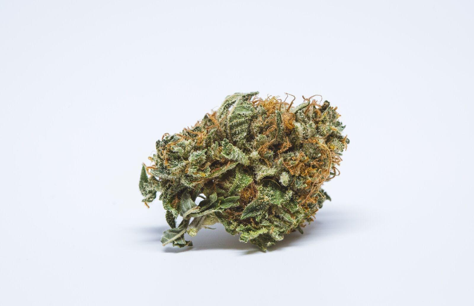 BC Big Bud Weed; BC Big Bud Cannabis Strain; BC Big Bud Hybrid Marijuana Strain