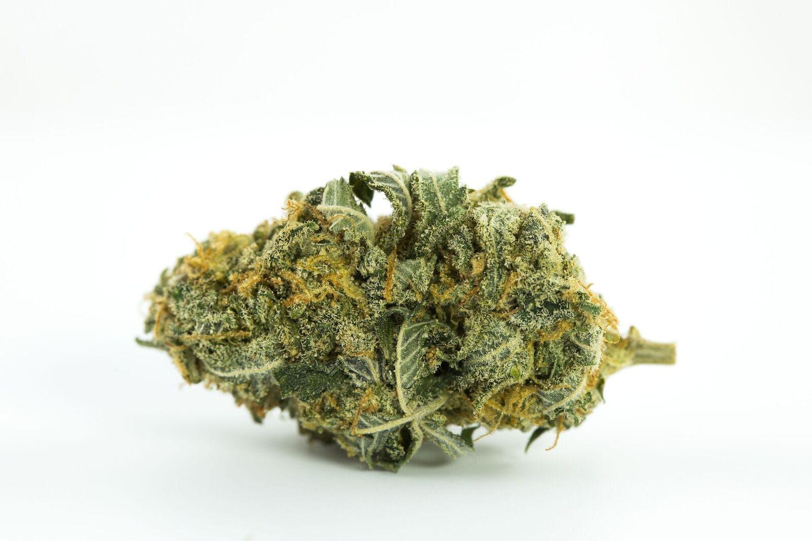 Bay 11 Weed; Bay 11 Cannabis Strain; Bay 11 Sativa Marijuana Strain