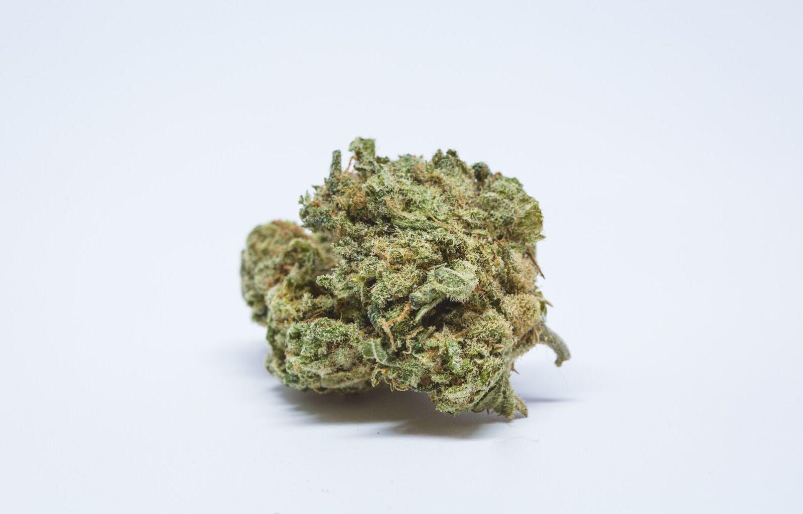 Bio-Diesel Weed; Bio-Diesel Cannabis Strain; Bio-Diesel Hybrid Marijuana Strain