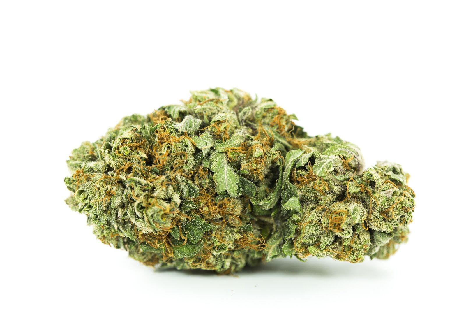 Black Tuna Weed; Black Tuna Cannabis Strain; Black Tuna Hybrid Marijuana Strain