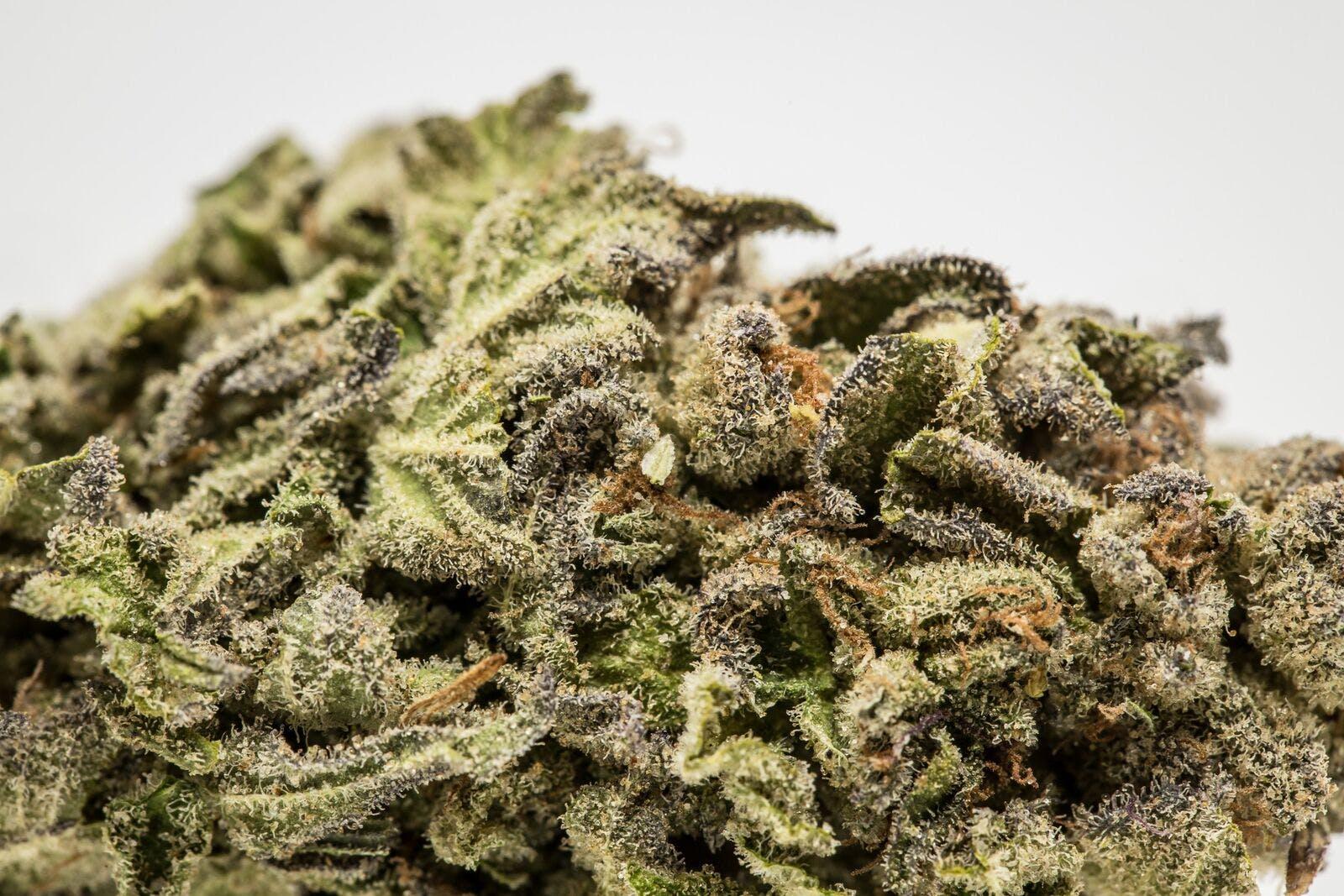 Candy Skunk Weed; Candy Skunk Cannabis Strain; Candy Skunk Sativa Marijuana Strain