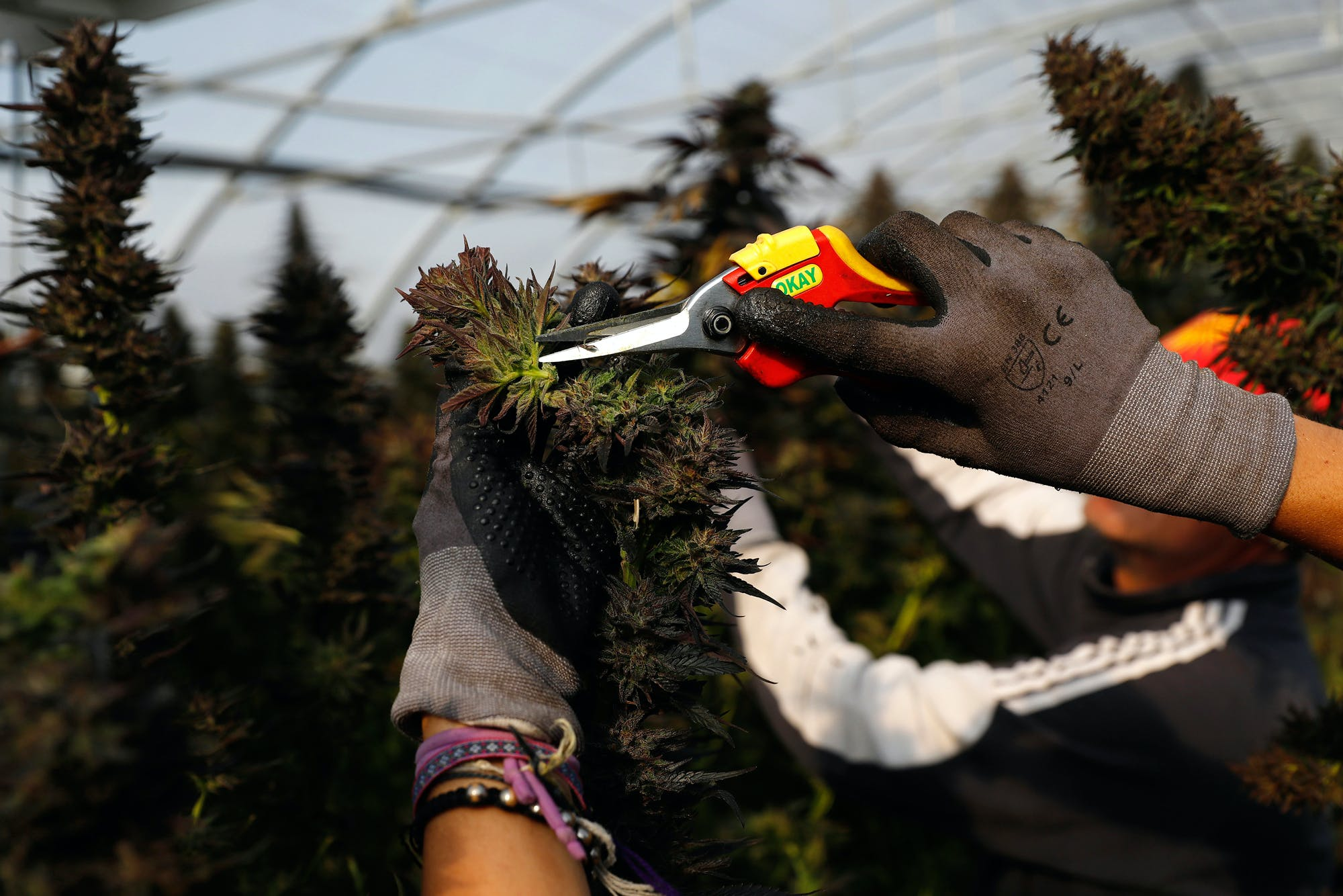 CannabisFarm The 5 best products for outdoor smoking sessions