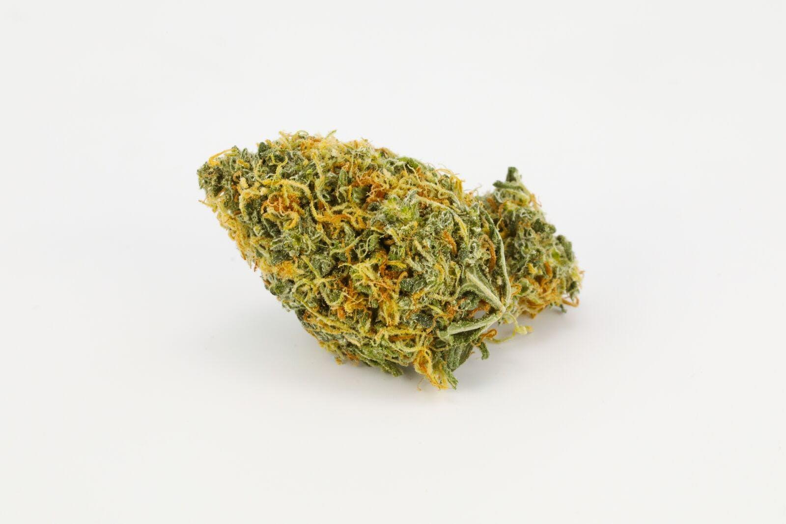 Chocolate Kush Weed; Chocolope Kush Cannabis Strain; Chocolope Indica Marijuana Strain