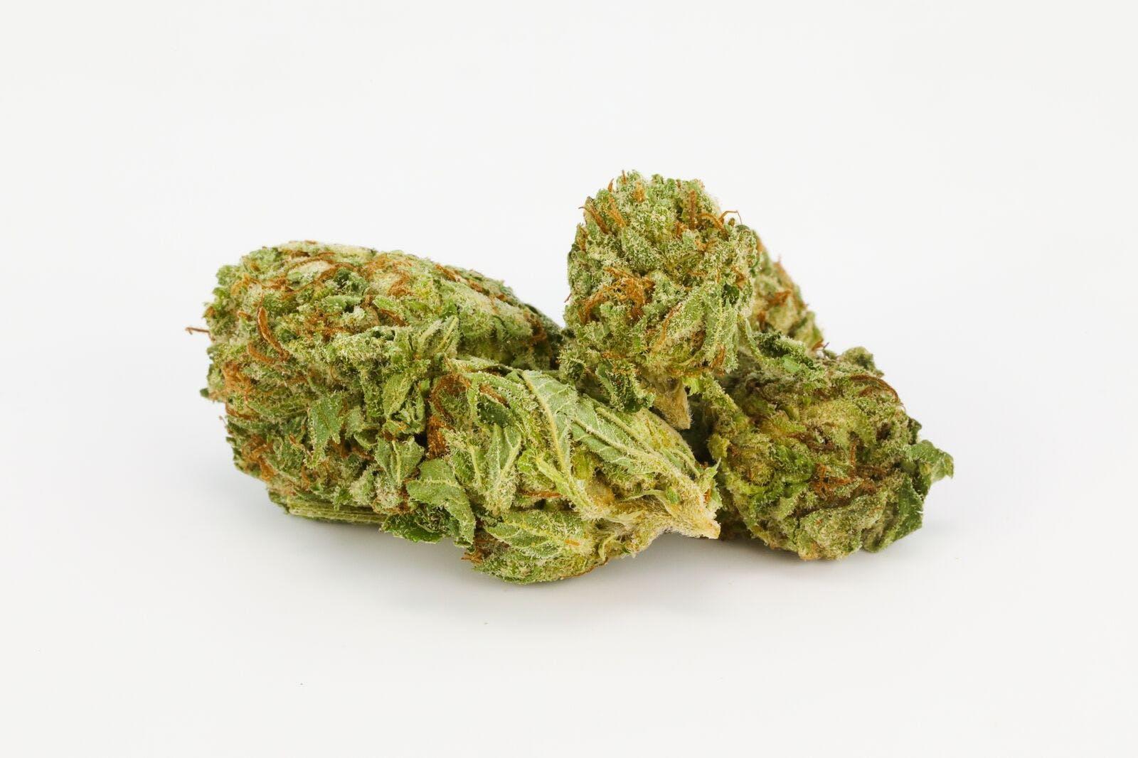 Chronic Weed; Chronic Cannabis Strain; Chronic Hybrid Marijuana Strain