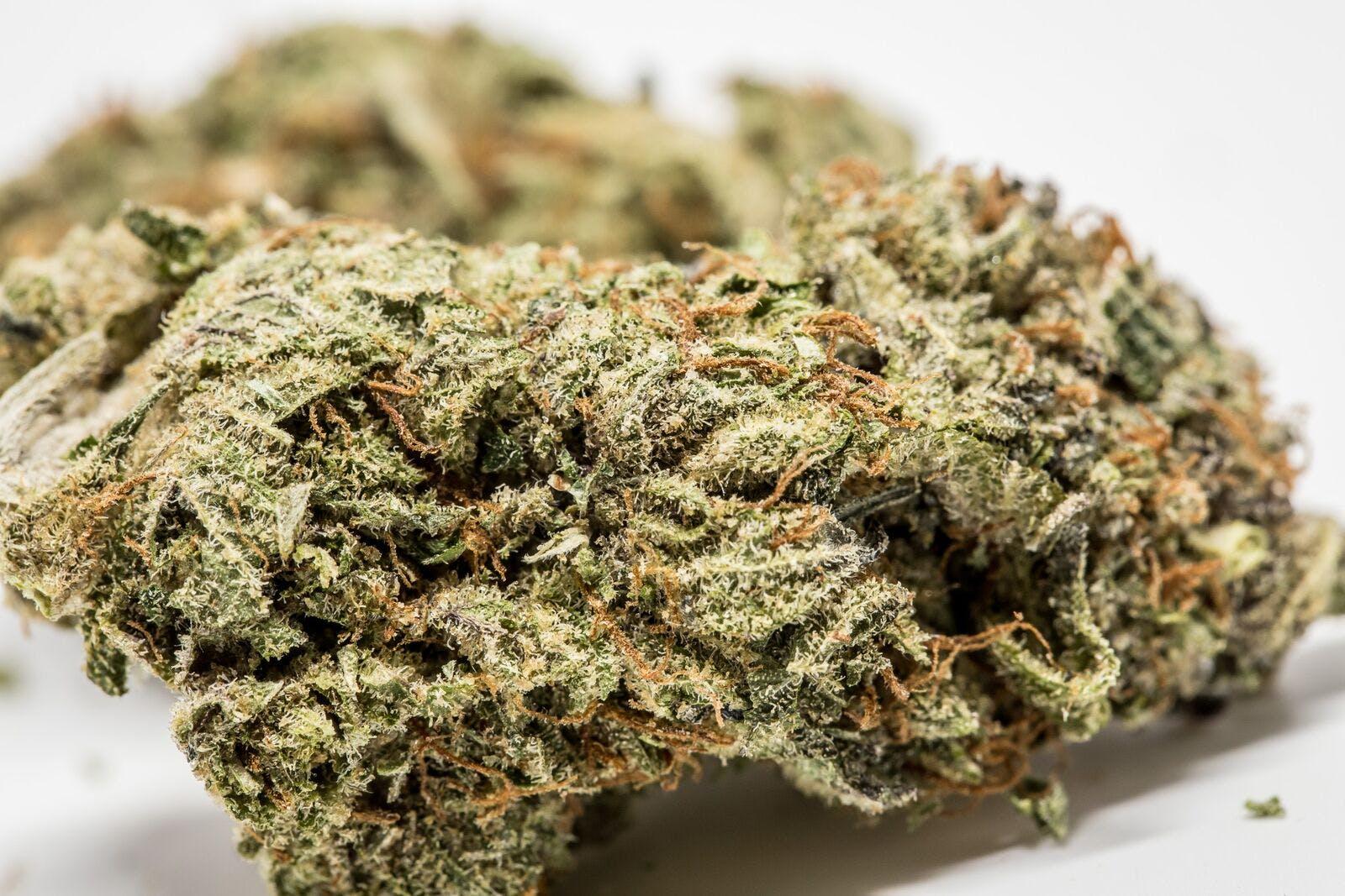 GG5 Weed; GG5 Cannabis Strain; GG5 Hybrid Marijuana Strain