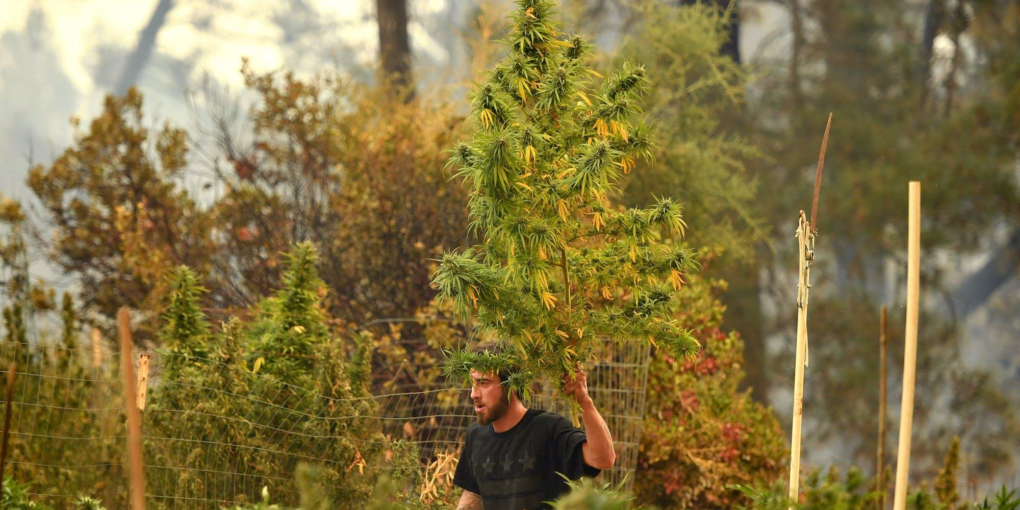 California's Marijuana Regulations Leave Behind Generations Of Humboldt Family Farms