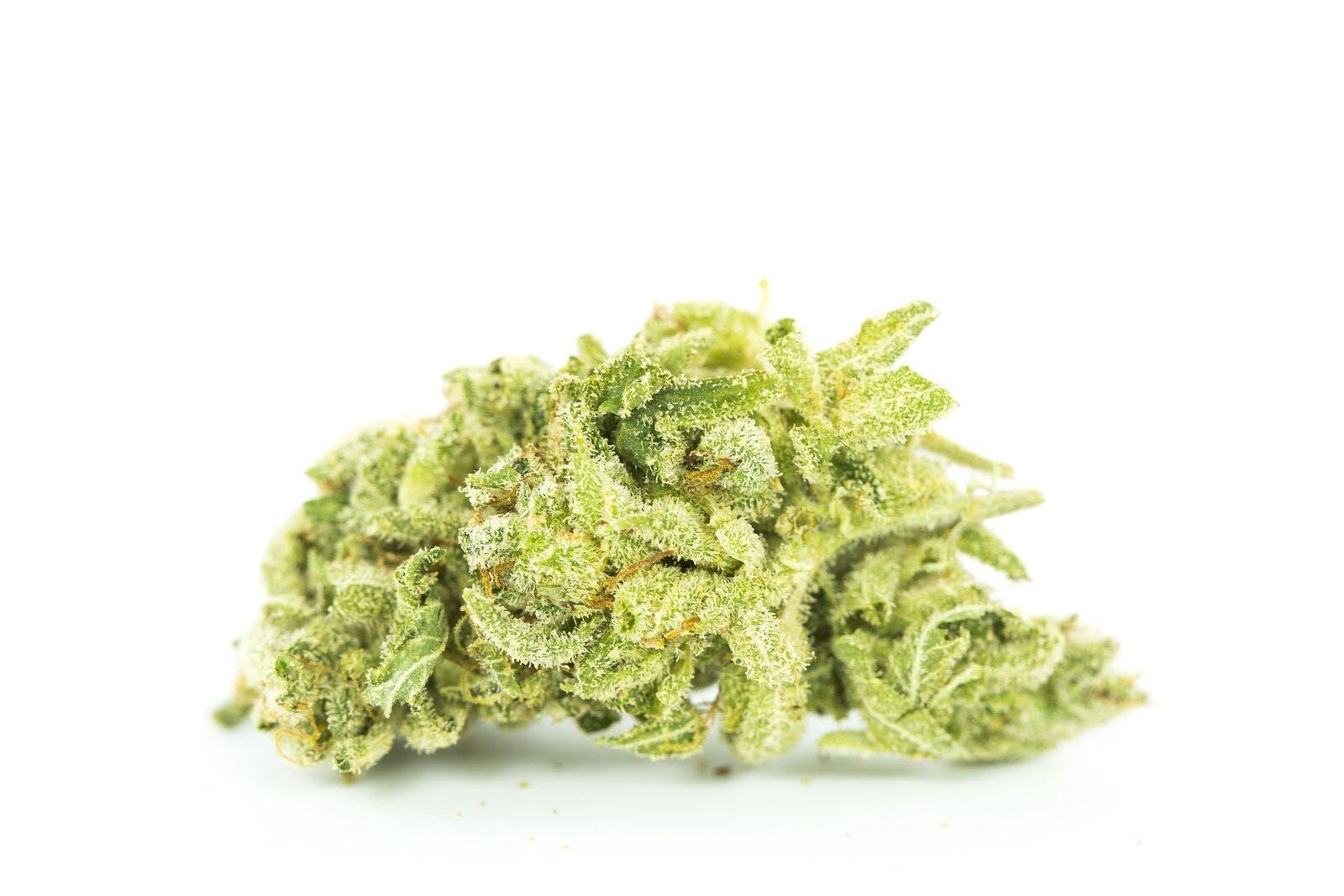 Gorilla Cookies Weed; Gorilla Cookies Cannabis Strain; Gorilla Cookies Hybrid Marijuana Strain
