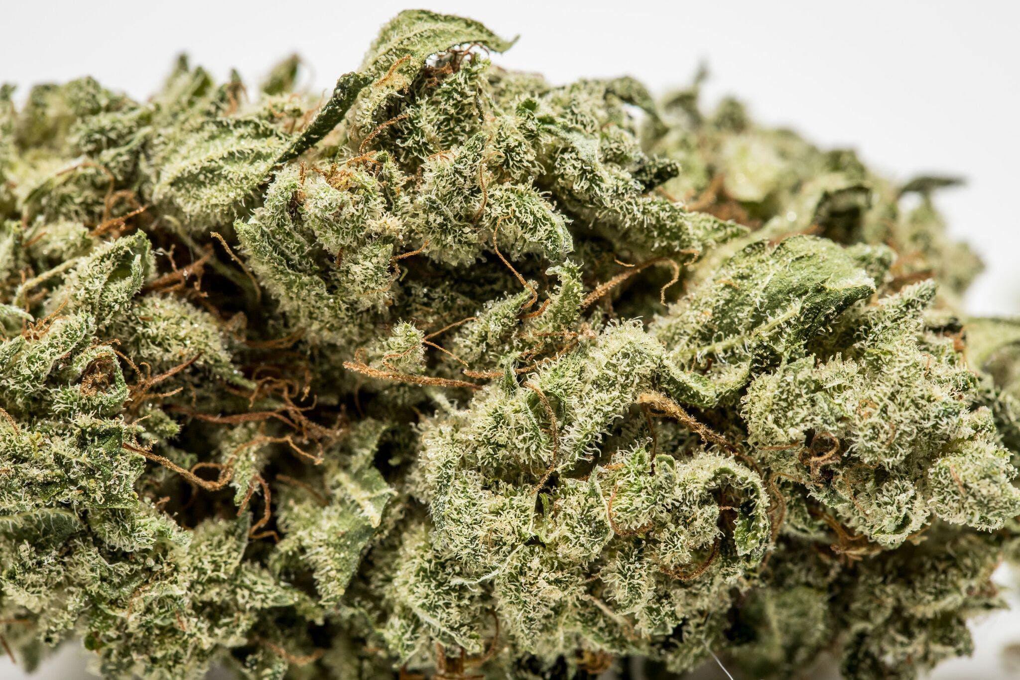 Jack Skellington Weed; Jack Skellington Cannabis Strain; Jack Skellington Sativa Marijuana Strain