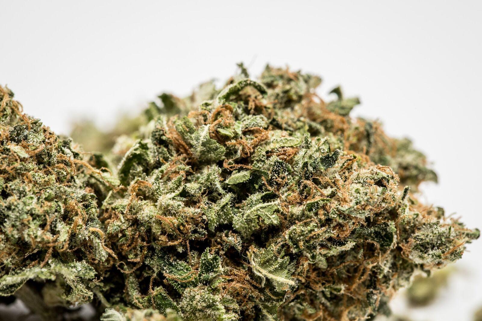 Mars OG Weed; Mars OG Cannabis Strain; Mars OG Indica Marijuana Strain