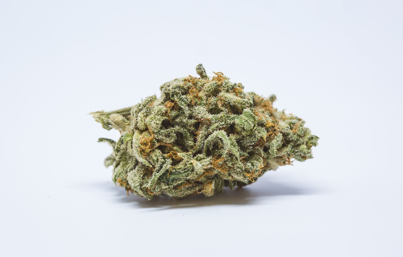 Mother's Helper Weed; Mother's Helper Cannabis Strain; Mother's Helper Hybrid Marijuana Strain