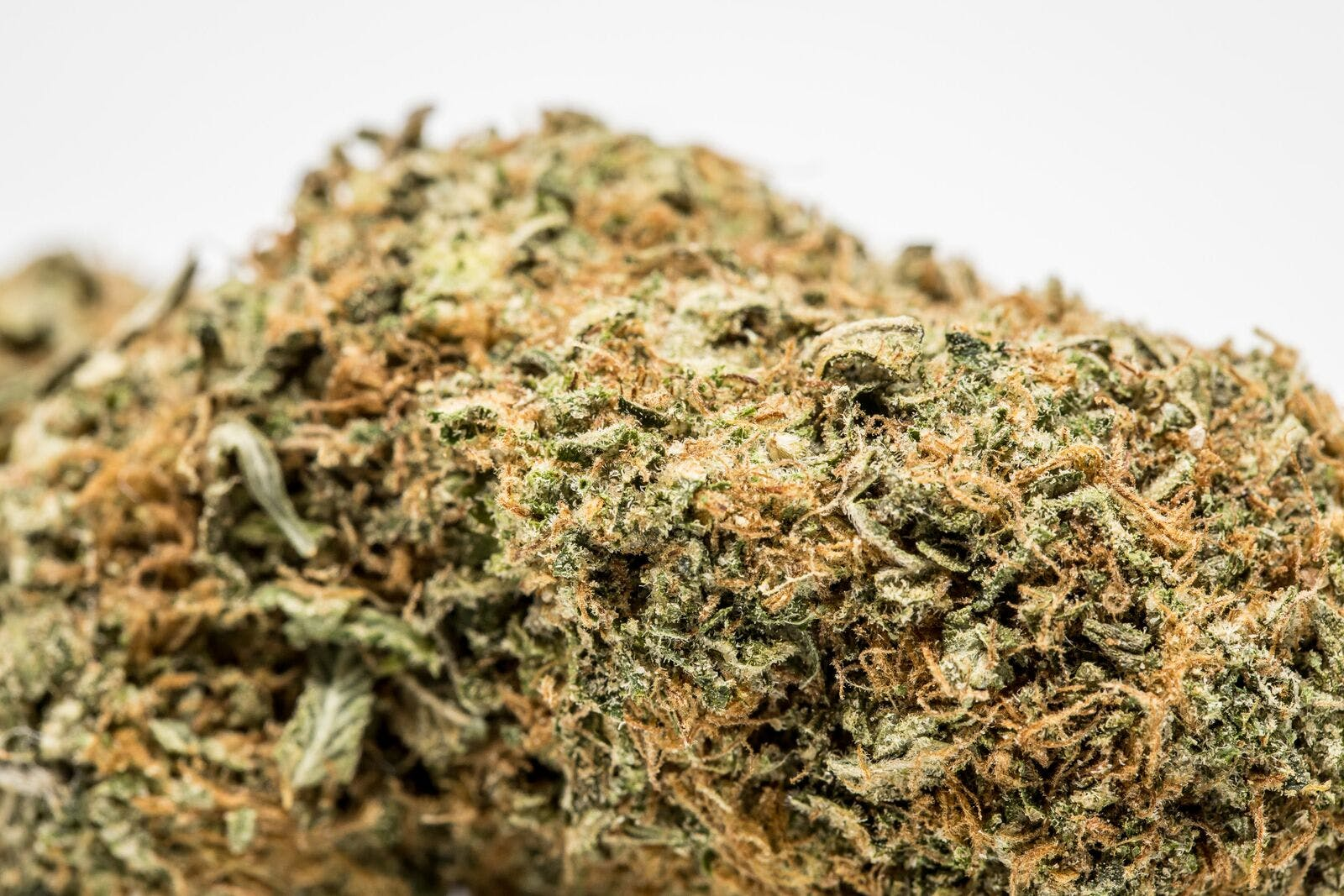 Pink Lemonade Weed; Pink Lemonade Cannabis Strain; Pink Lemonade Hybrid Marijuana Strain