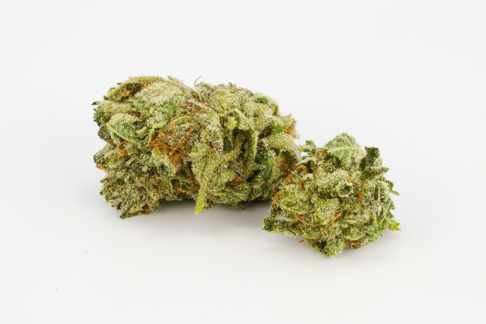 Purple Amnesia Weed; Purple Amnesia Cannabis Strain; Purple Amnesia Sativa Marijuana Strain