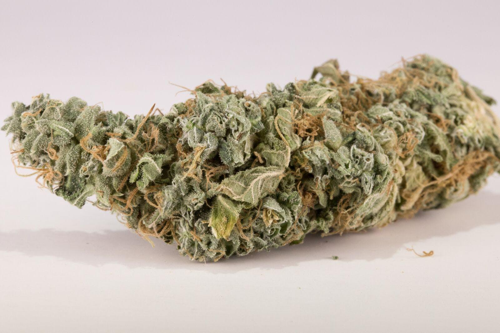 Rene Haze Weed; Rene Haze Cannabis Strain; Rene Haze Sativa Marijuana Strain