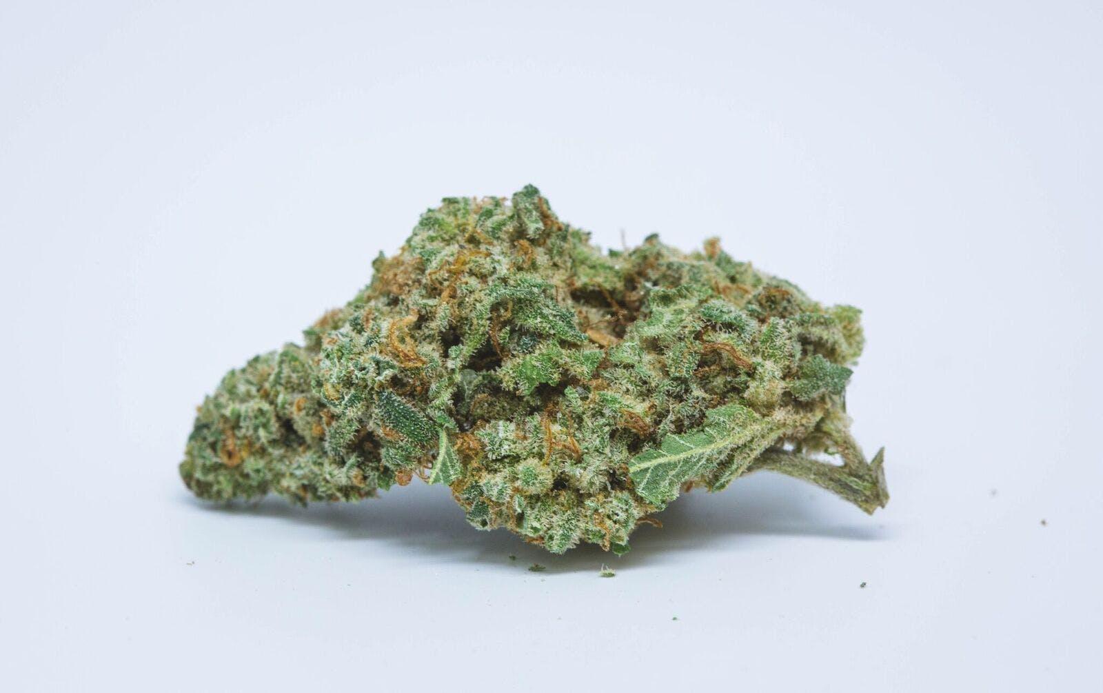 Sour Banana Sherbet Weed; Sour Banana Sherbet Cannabis Strain; Sour Banana Sherbet Hybrid Marijuana Strain