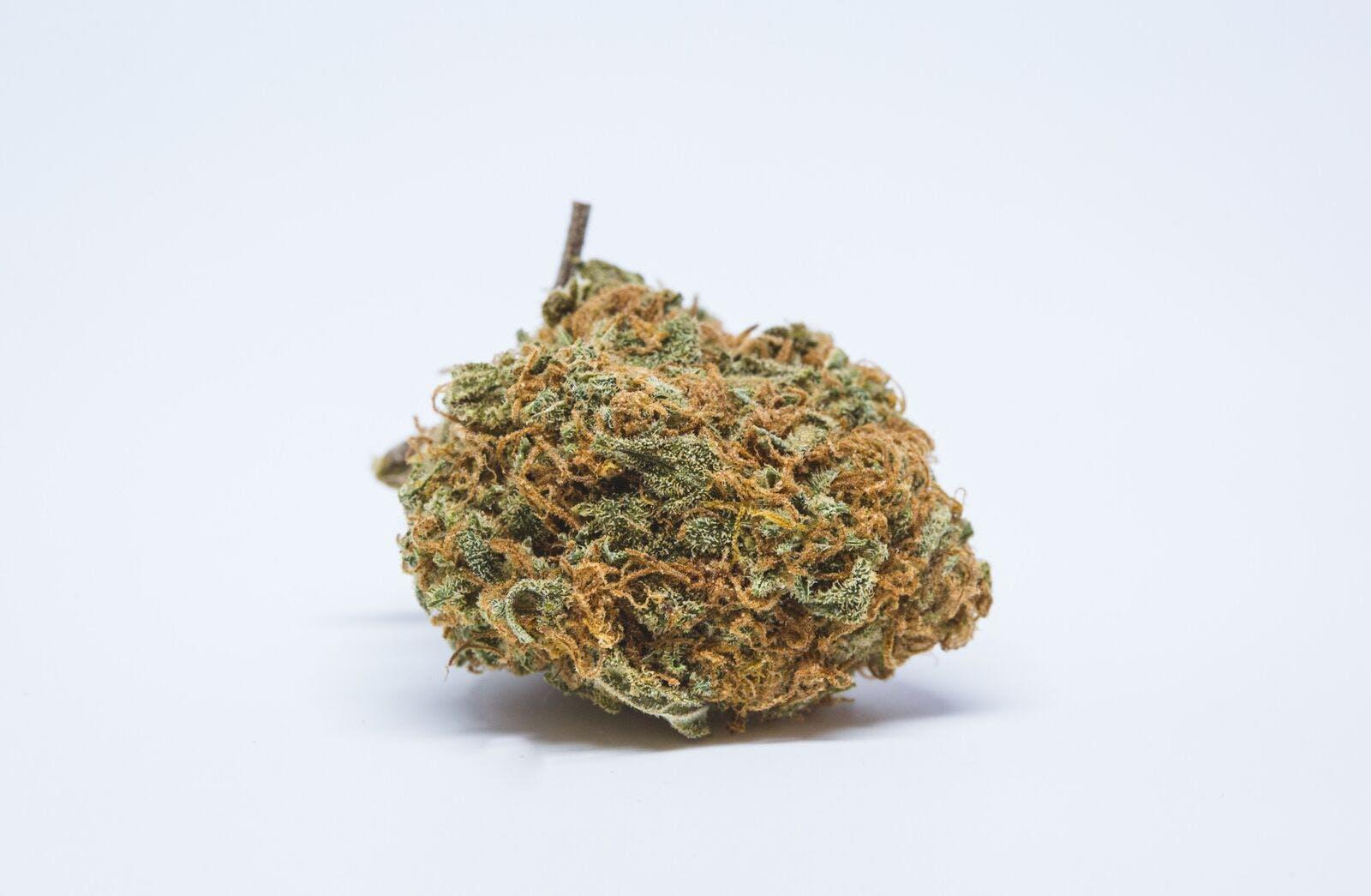 Sour Cheese Weed; Sour Cheese Cannabis Strain; Sour Cheese Hybrid Marijuana Strain