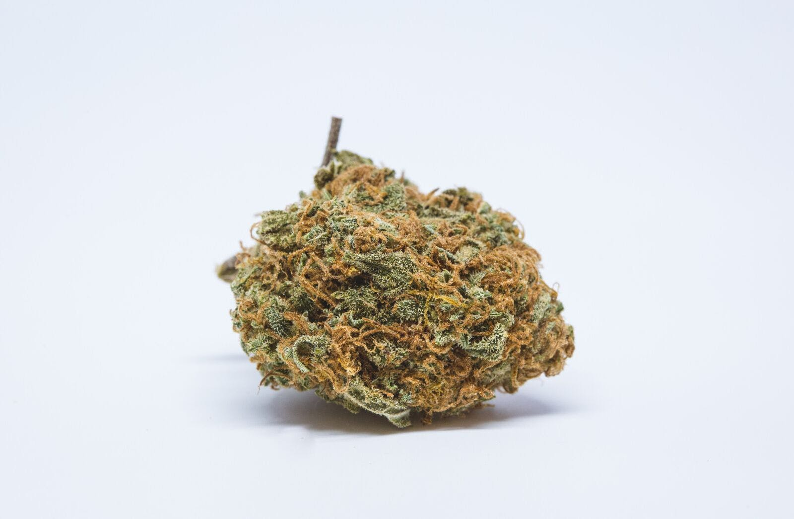 Sweet Cheese Weed; Sweet Cheese Cannabis Strain; Sweet Cheese Sativa Marijuana Strain