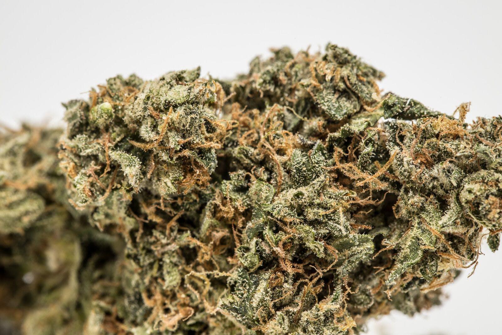 Sweet Diesel Weed; Sweet Diesel Cannabis Strain; Sweet Diesel Sativa Marijuana Strain