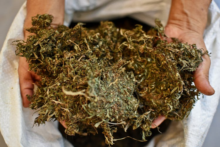 This is the Cheapest Weed in the World3 Where You Can Find the Cheapest Weed in the World