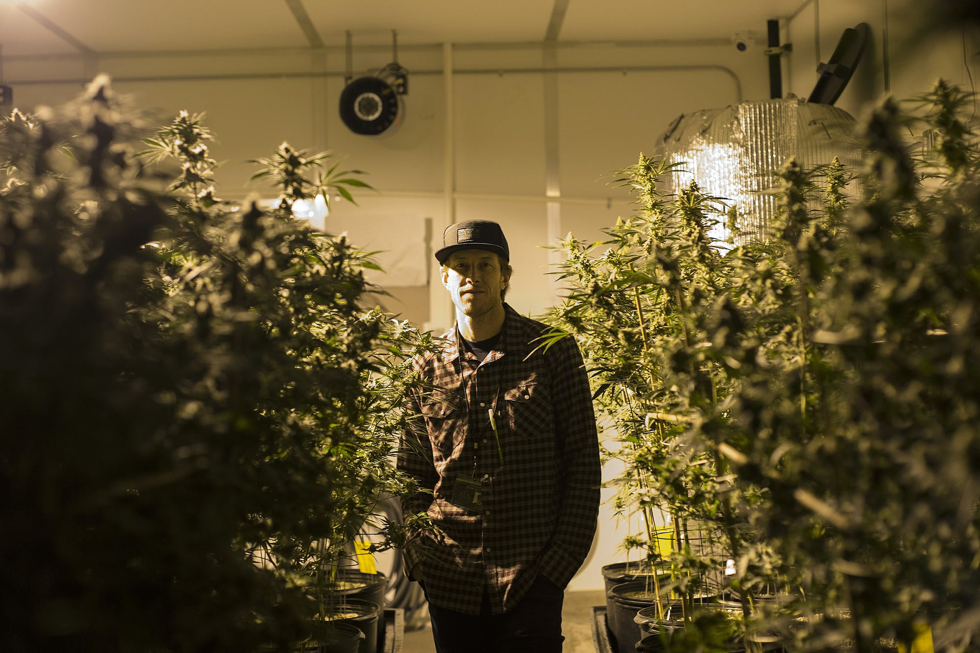 Washingtonstatecannabis Medical marijuana patients are getting evicted in legal states