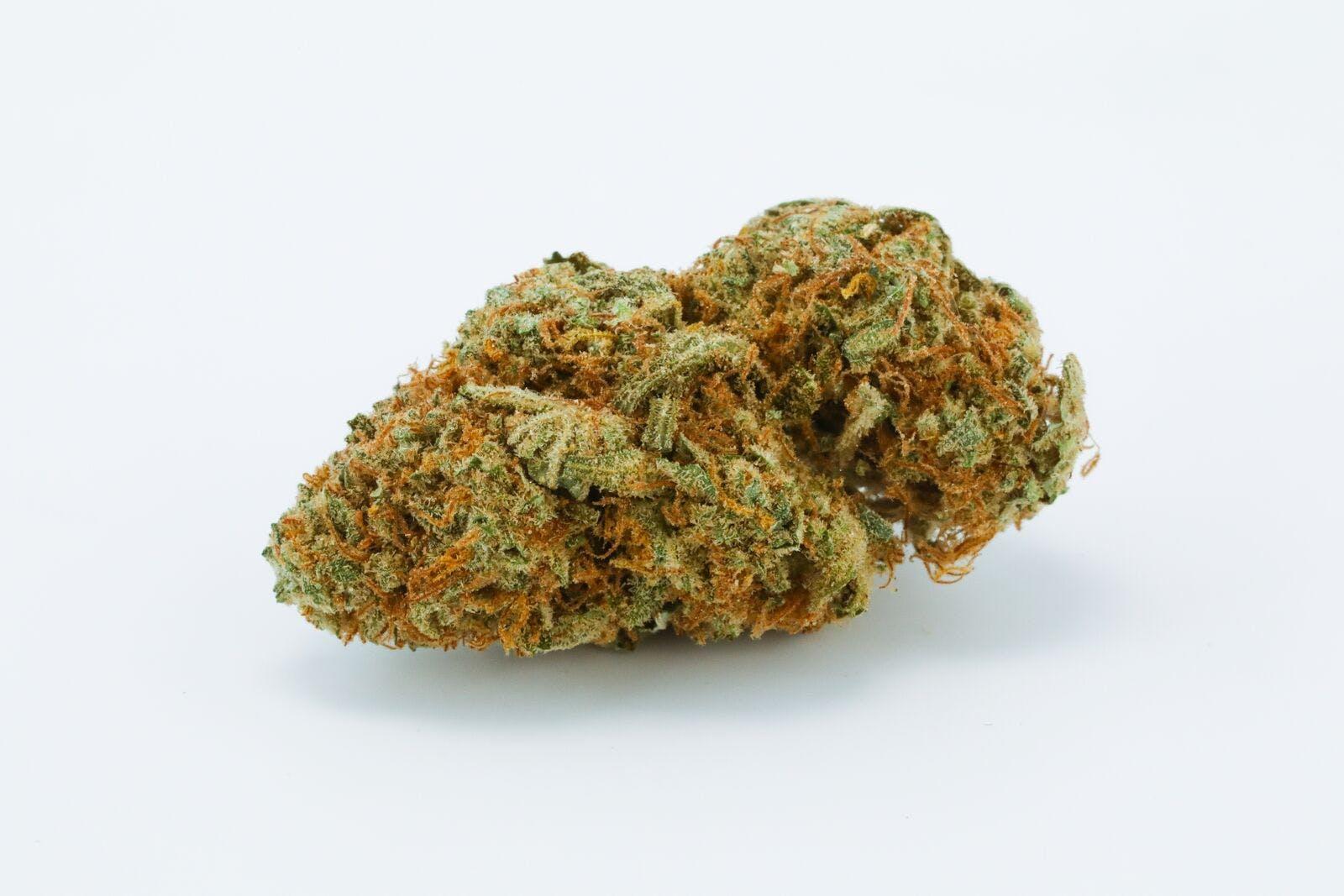 White Gold Weed; White Gold Cannabis Strain; White Gold Hybrid Marijuana Strain