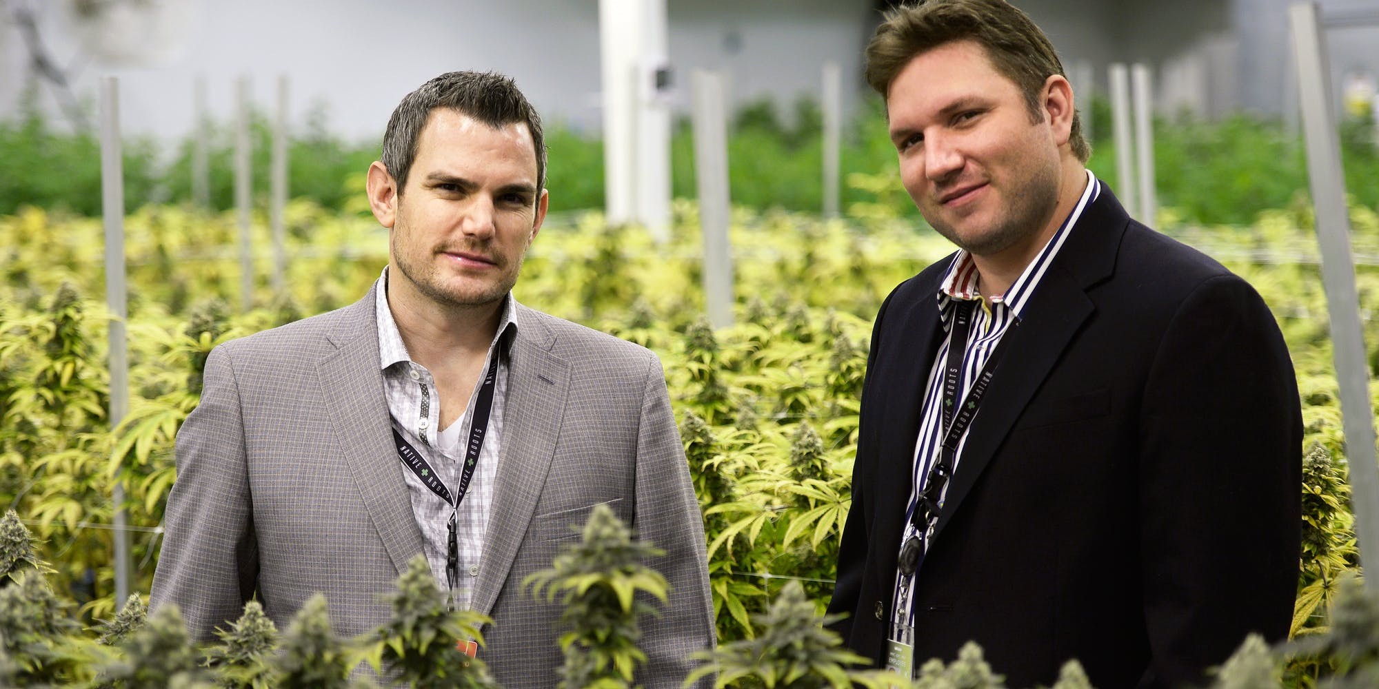 Harvard Study Finds Liberal Cannabis Policies Fuel Innovation