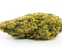 Chiesel weed; Chiesel Cannabis Strain; Chiesel Hybrid Marijuana Strain