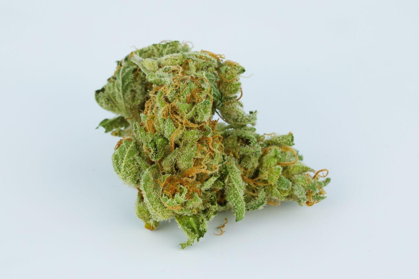 Game Changer Weed; Game Changer Cannabis Strain; Game Changer Hybrid Marijuana Strain