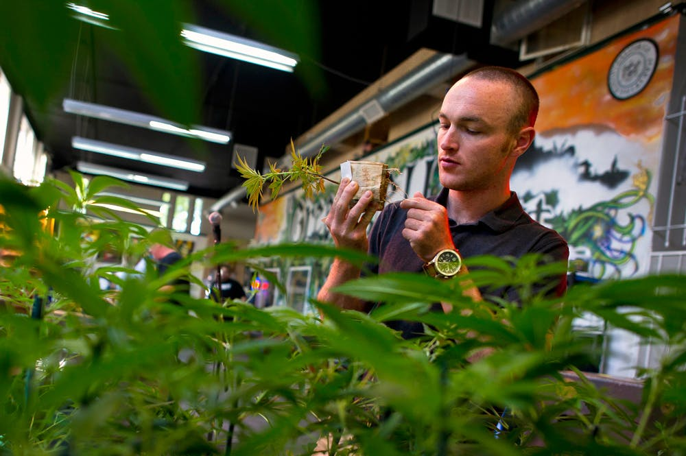GettyImages 121712433 Its Official: Michigan is set to vote on recreational marijuana this fall