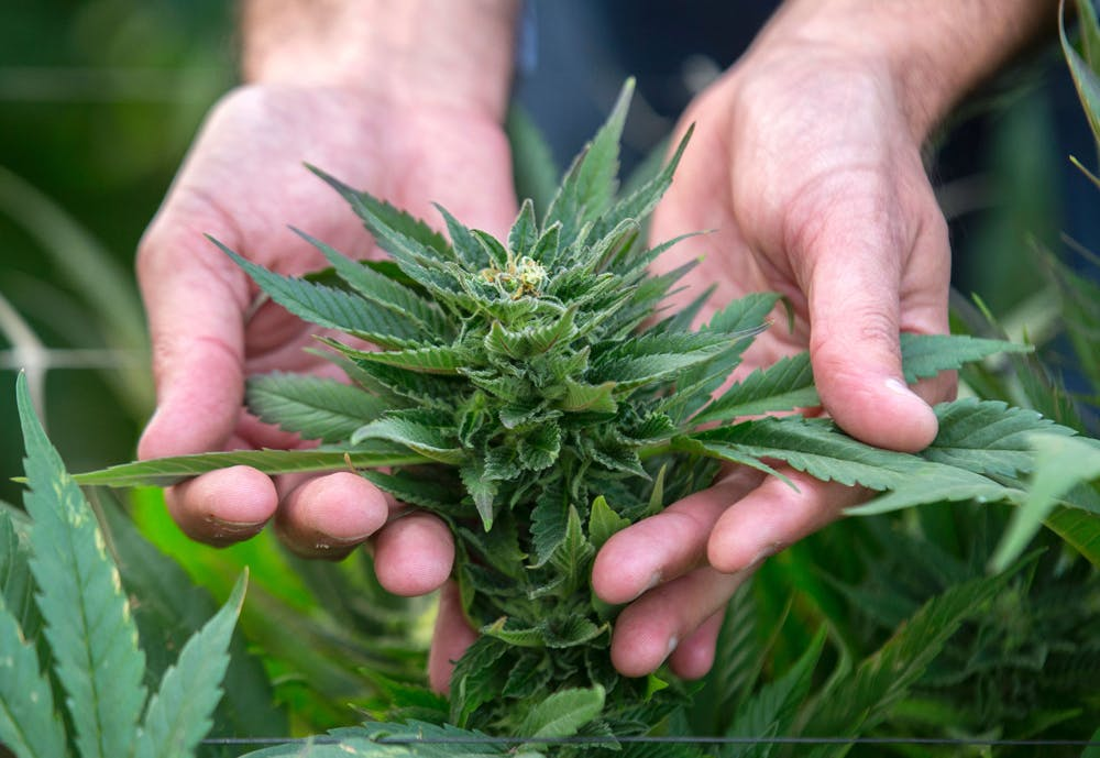 GettyImages 517696964 Its Official: Michigan is set to vote on recreational marijuana this fall