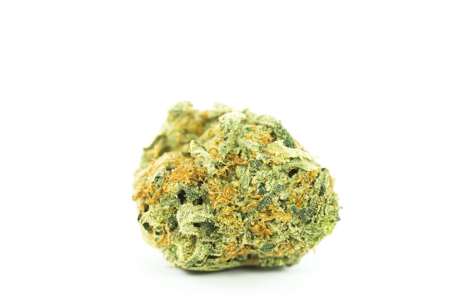 Golden Ticket Weed; Golden Ticket Cannabis Strain; Golden Ticket Hybrid Marijuana Strain
