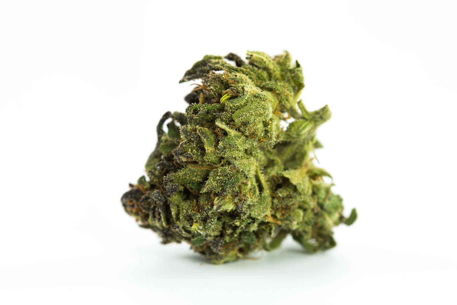 Green Dragon Weed; Green Dragon Cannabis Strain; Green Dragon Indica Marijuana Strain