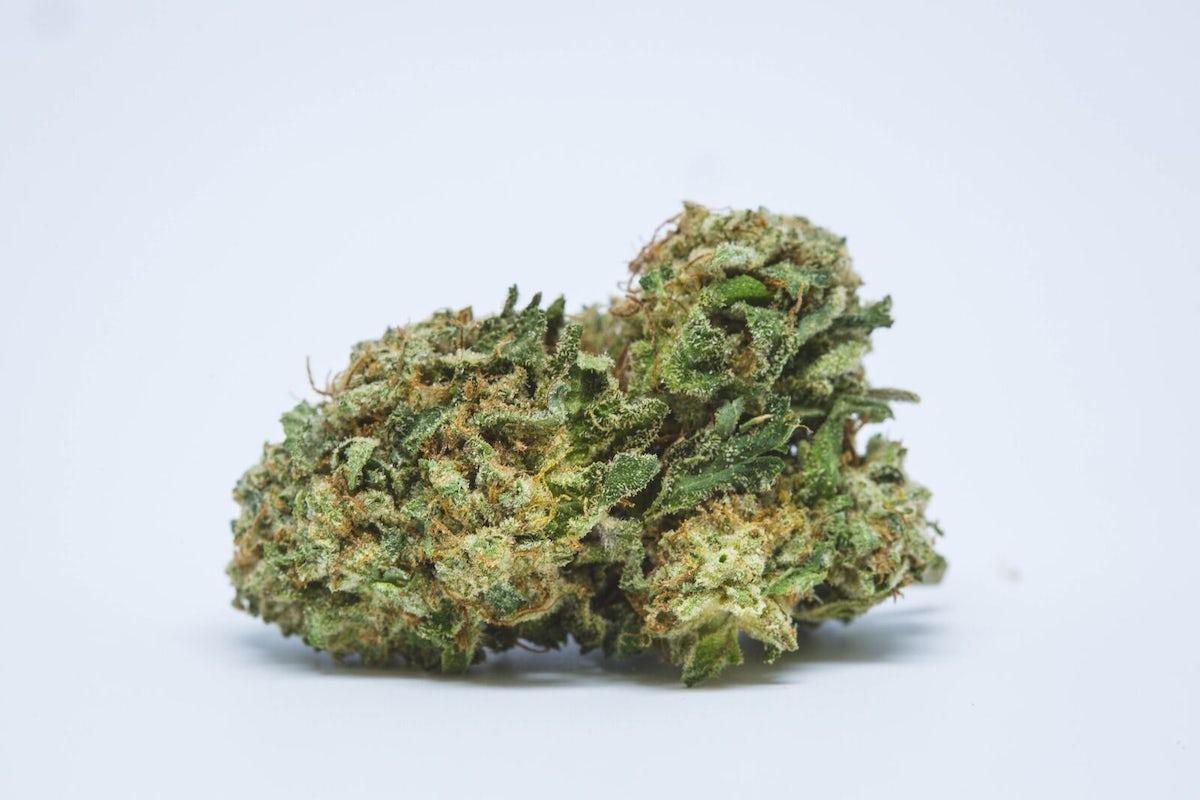Green Haze Strain of Marijuana | Weed | Cannabis | Herb | Herb