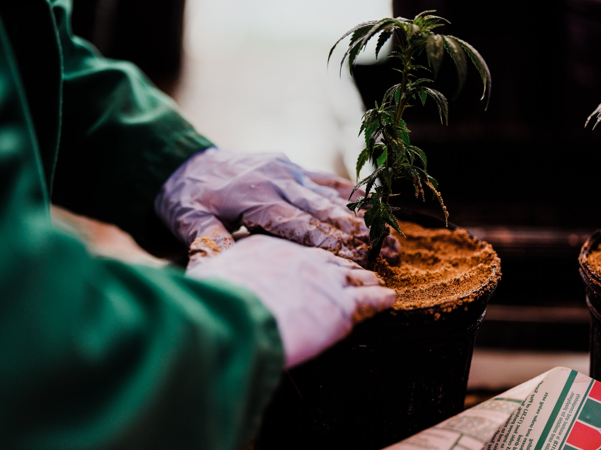 Green Relief 8 of 16 For The First Time, Thailand Seriously Considers Legalizing Medical Marijuana