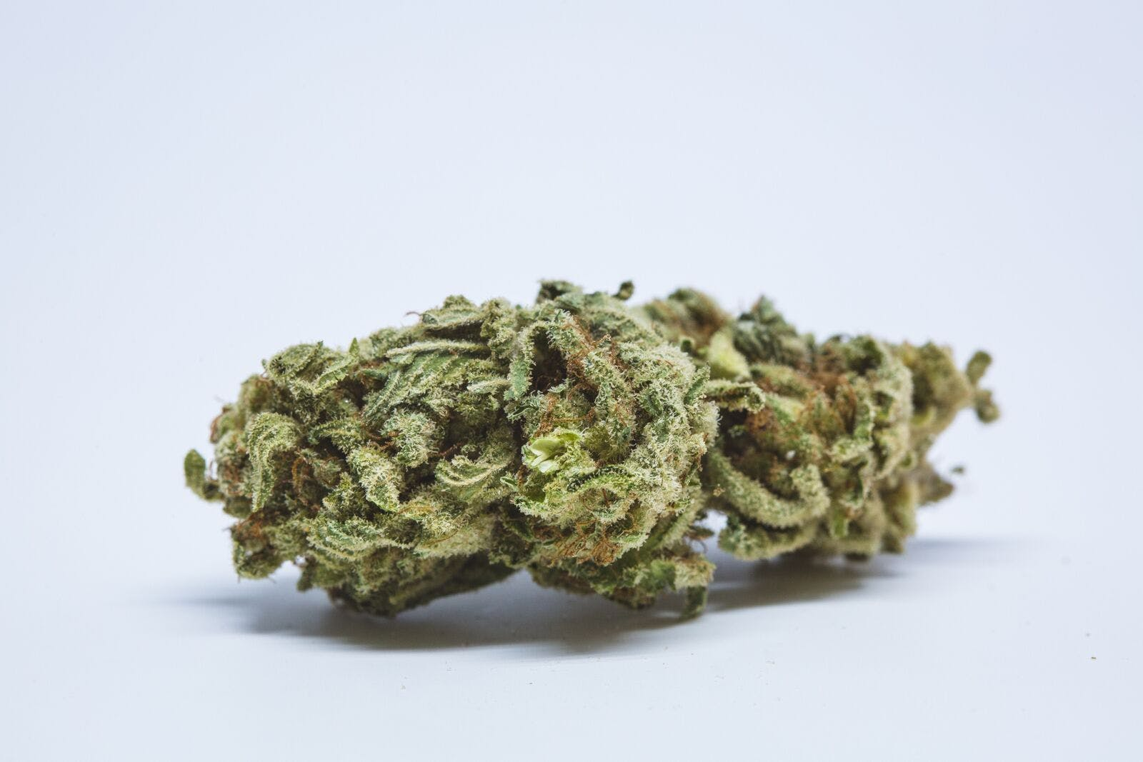 Hawaiian Punch Weed; Hawaiian Punch Cannabis Strain; Hawaiian Punch Sativa Marijuana Strain