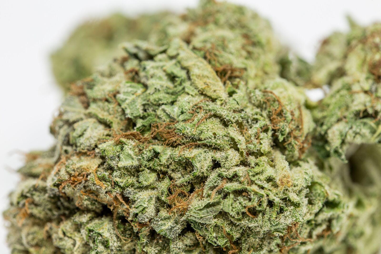 Jedi OG Weed; Jedi OG Cannabis Strain; Jedi OG Indica Marijuana Strain