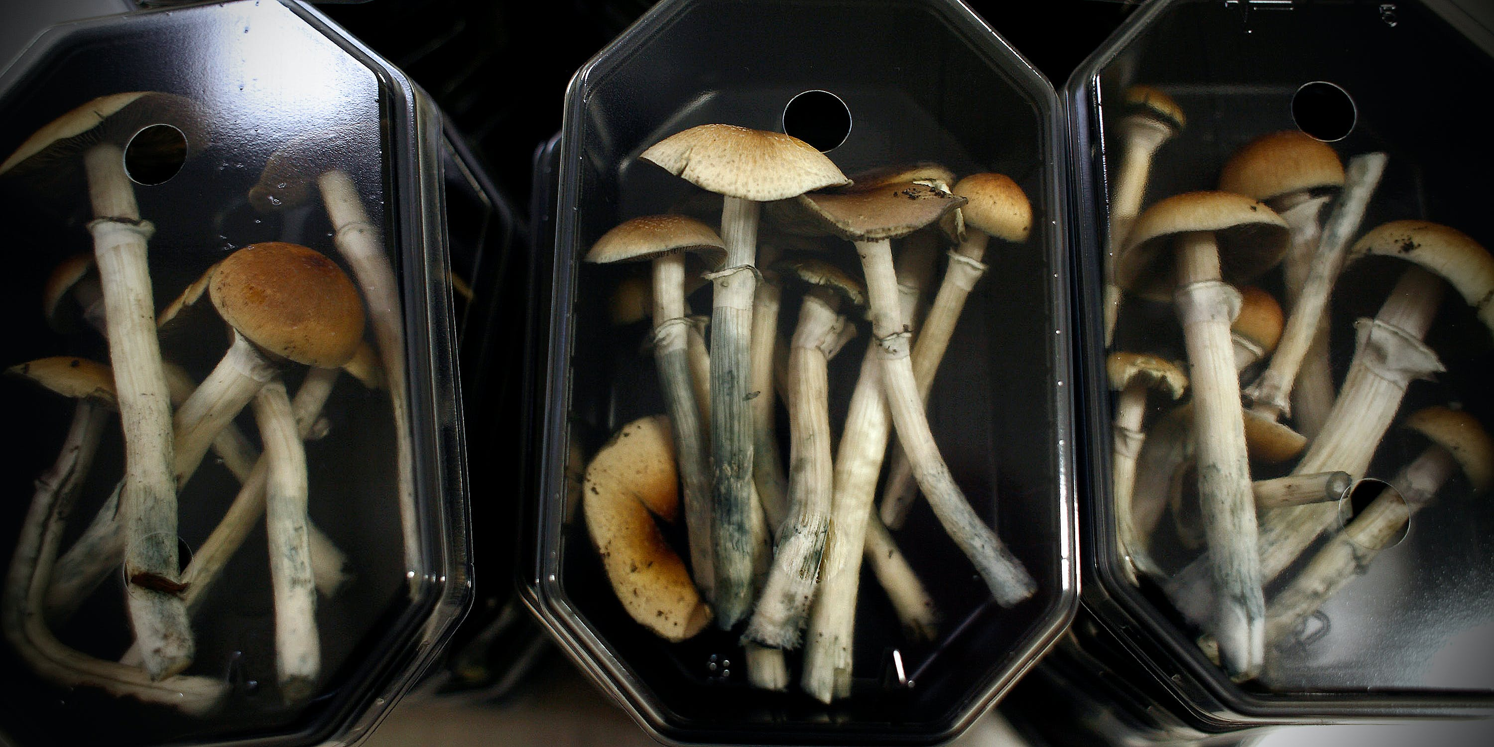 Will Psychedelics Go Corporate Like Cannabis?
