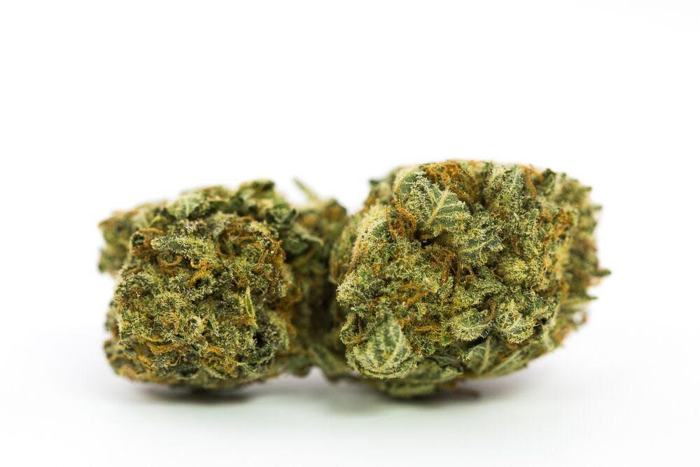 Mob Boss Weed; Mob Boss Cannabis Strain; Mob Boss Hybrid Marijuana Strain