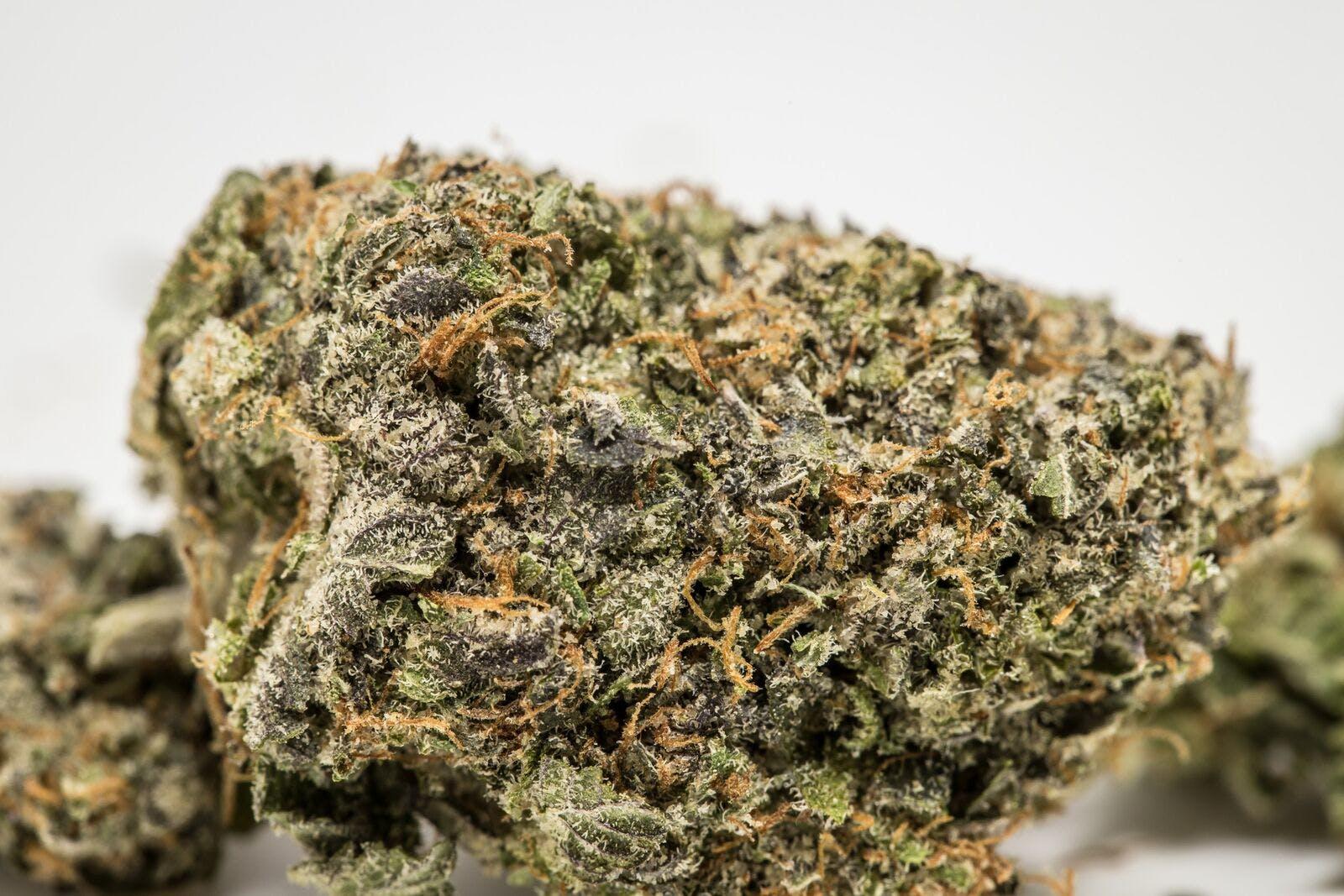 Pink Panther Weed; Pink Panther Cannabis Strain; Pink Panther Hybrid Marijuana Strain