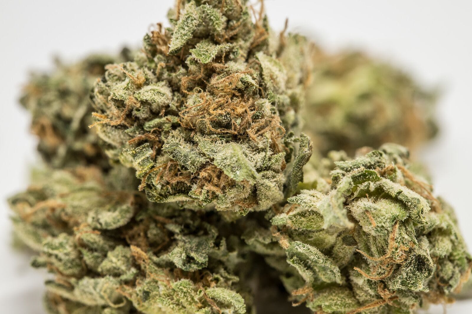 Rockstar Marijuana Strain How to Get the Most Out Of Your Stash with the Best Weed Grinders