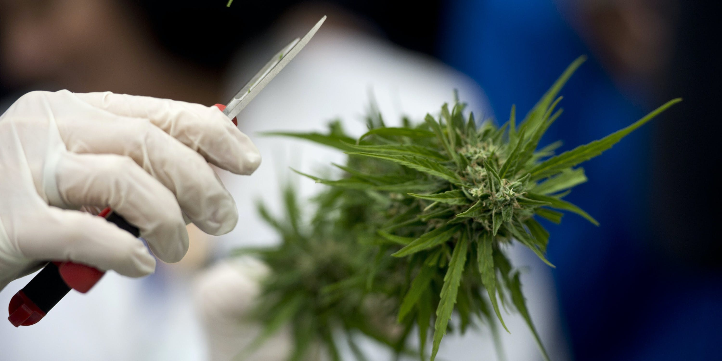 This might be the first cannabis-based drug to get approved