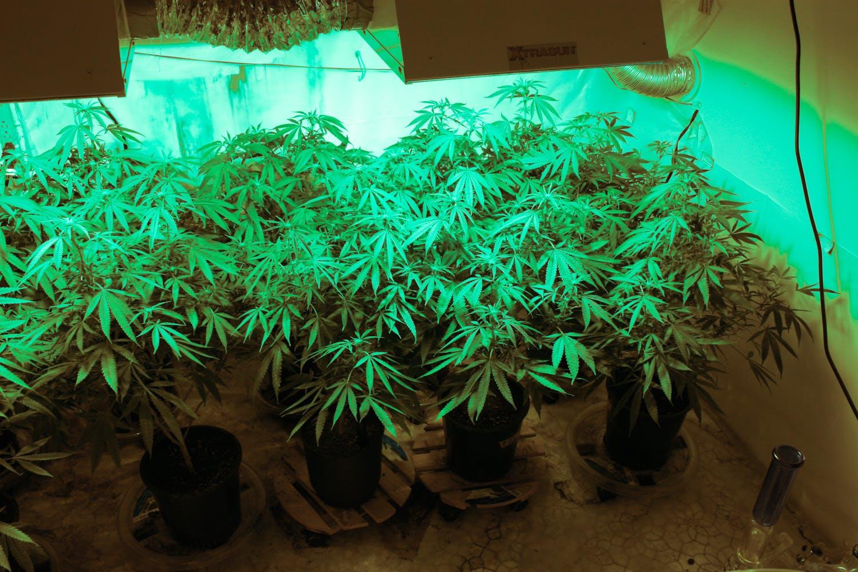 How to Grow Weed in Your Apartment 3 Congress Blocks Recreational Marijuana Sales In Washington, D.C.