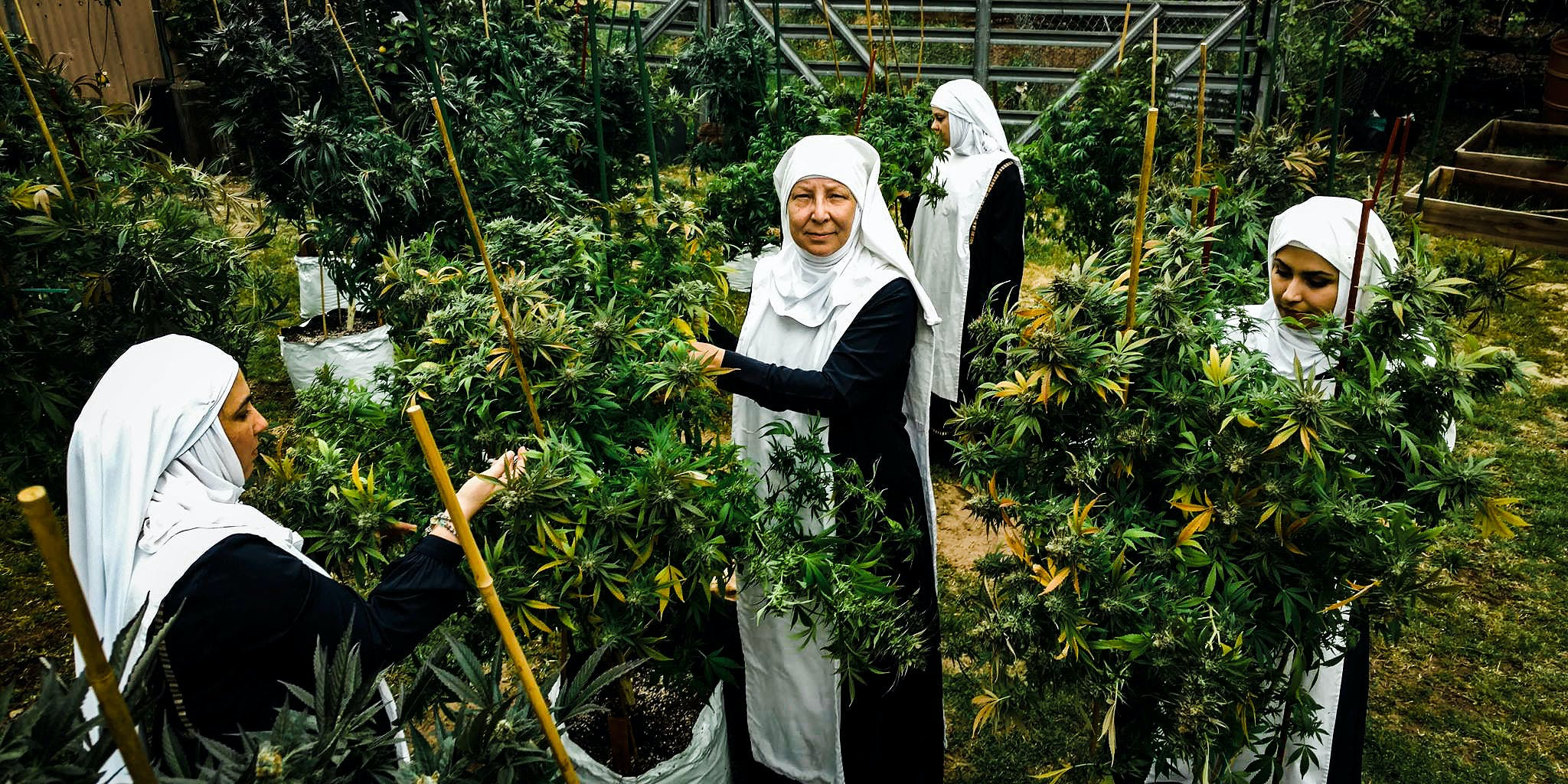 New Documentary Profiles Weed Growing Nuns Will Release This Fall