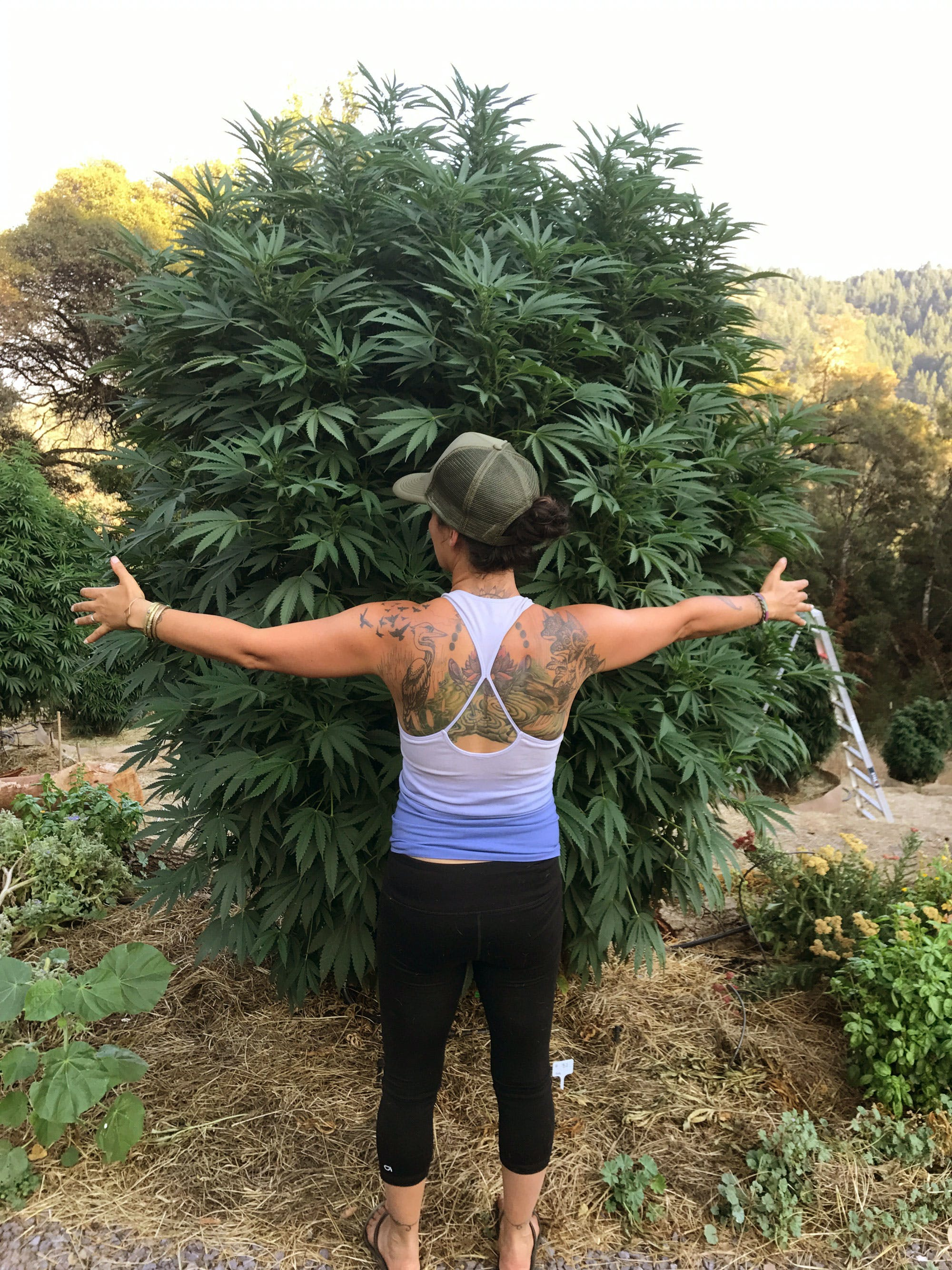 What Its Like To Be Married To A Cannabis Farmer In Humboldt 2 Cannabis Cafes In Paris Are Trying To Claim The Bud They Sell Isnt For Smoking