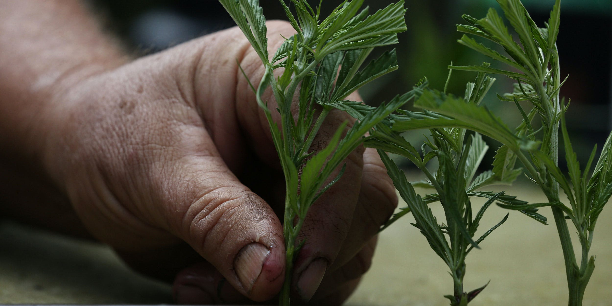 How Legal Weed Could Save American Indian Communities